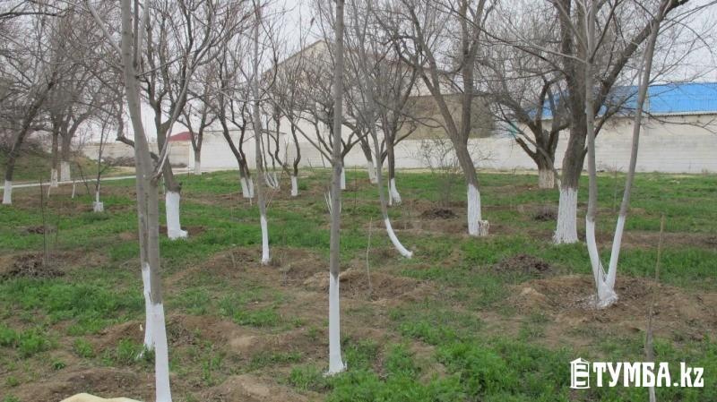Сотрудники АО «КазНИПИмунайгаз» провели субботник в саду в Форт-Шевченко