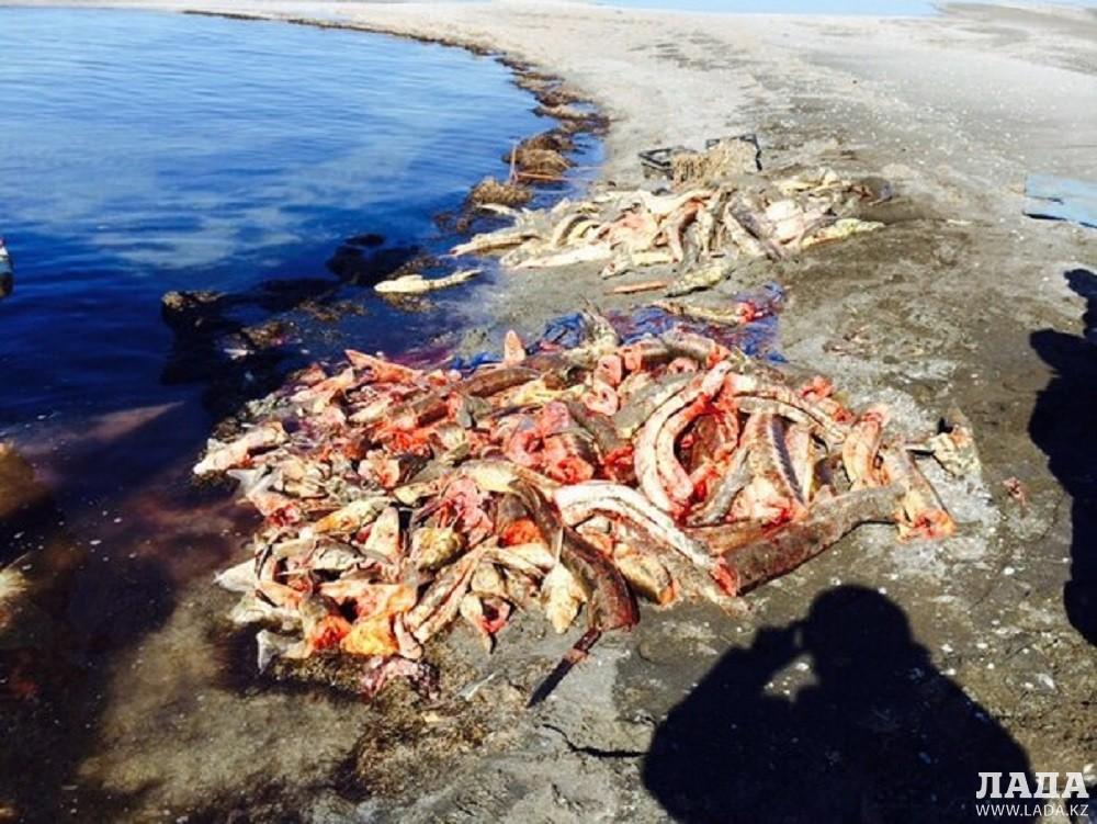 В Мангистауской области за две недели браконьеры нанесли ущерб на 5 миллионов тенге