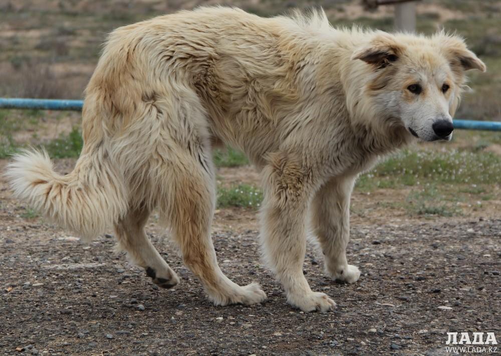 Жители Актау пожаловались на бродячих собак в 8 микрорайоне