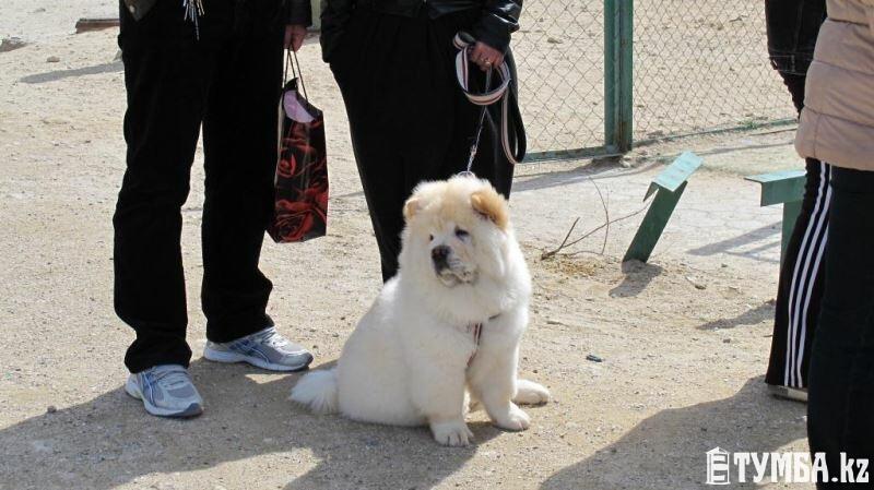 В Актау прошла национальная выставка собак «Жемчужина Каспия 2015»