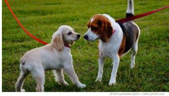 Штраф за неубранные собачьи экскременты хотят ввести в Казахстане