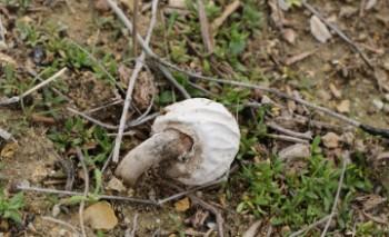 Жители Актау нашли в окрестностях города грибы (ВИДЕО)