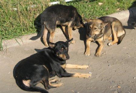 Тендер на отлов бродячих животных в Актау никто не выиграл