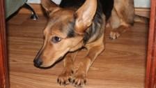Зоозащитники: В Актау ни одного дела о жестоком обращении с животными не доведено до суда
