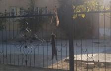 В Актау подростки замучили кролика и повесили его на заборе