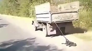 Протащил собаку по трассе: водитель объяснил жестокий поступок