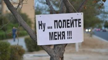 Деревья в Актау просят воды