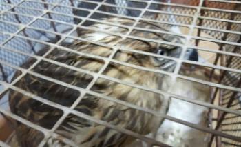 В Мангыстау задержали водителя с краснокнижной птицей