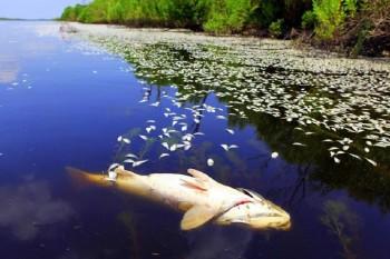 Названы причины гибели рыб в Мангистау