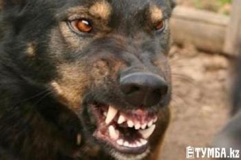 Двухлетнего ребенка покусала собака в Мангистауской области