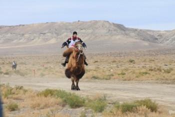 Верблюжьи бега провели в Мангистауской области